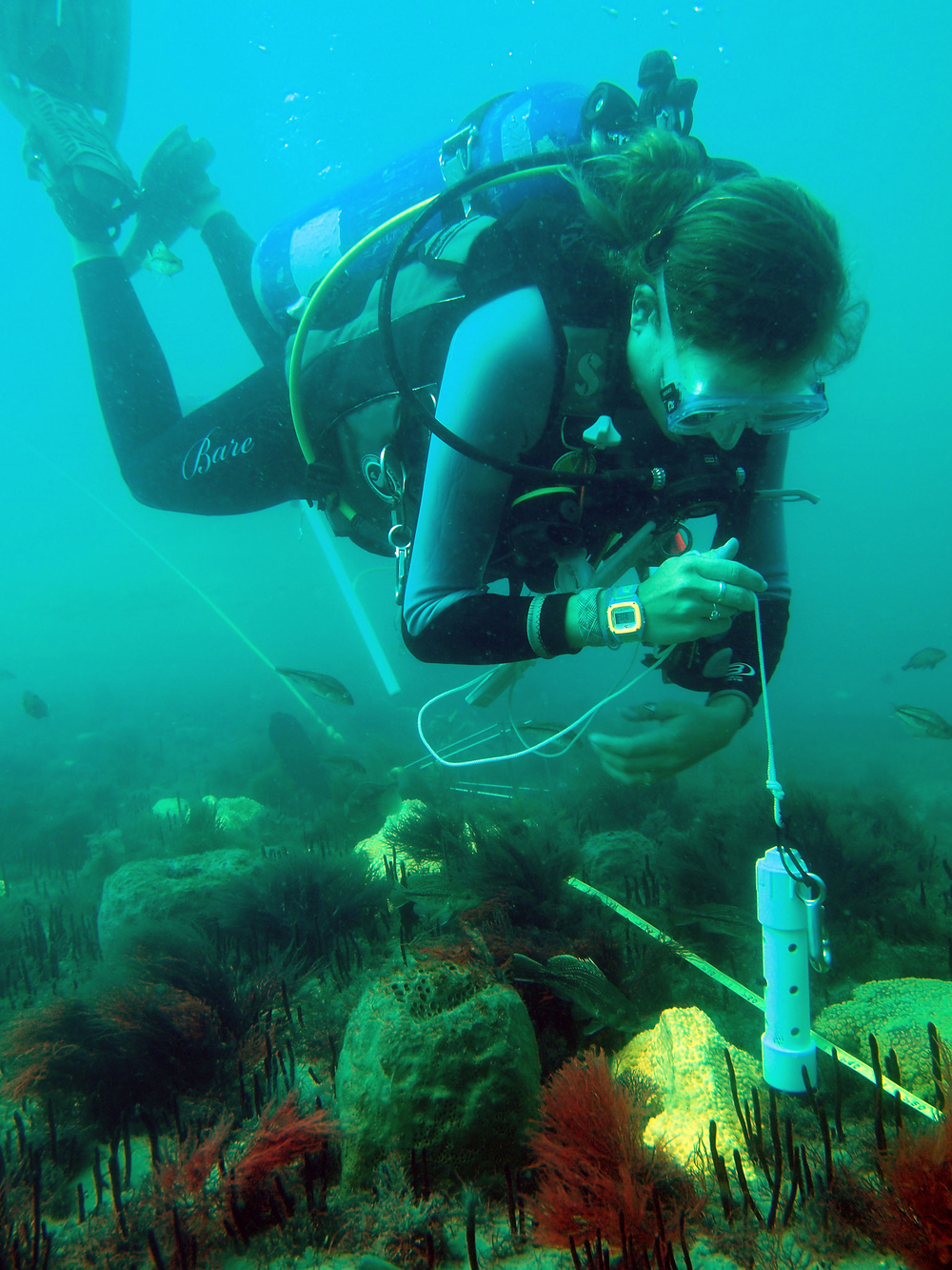 Scientific diver, Alyssa Adler, measures structural relief, or topography, of a hard-bottom reef populated by sponges, soft coral, and macroalgae. Photo credit: A. Paxton/UNC Institute of Marine Sciences, Flickr.com. Interact with the Institute of Marine Sciences on Twitter  @UNCims .