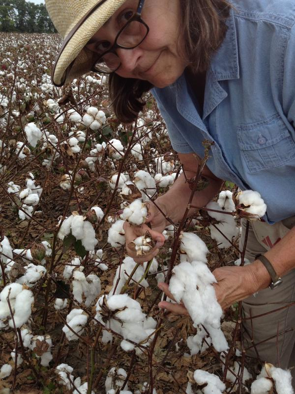 University cotton research entomologist.