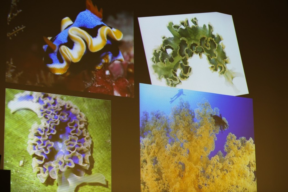 Hyperbolic forms in marine organisms. Slide by Sophia Roosth. Photo by Paige B. Jarreau.