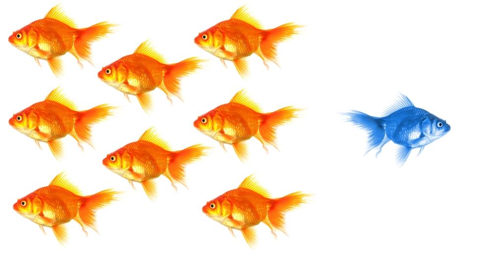 Shutterstock: http://ow.ly/BeU9i