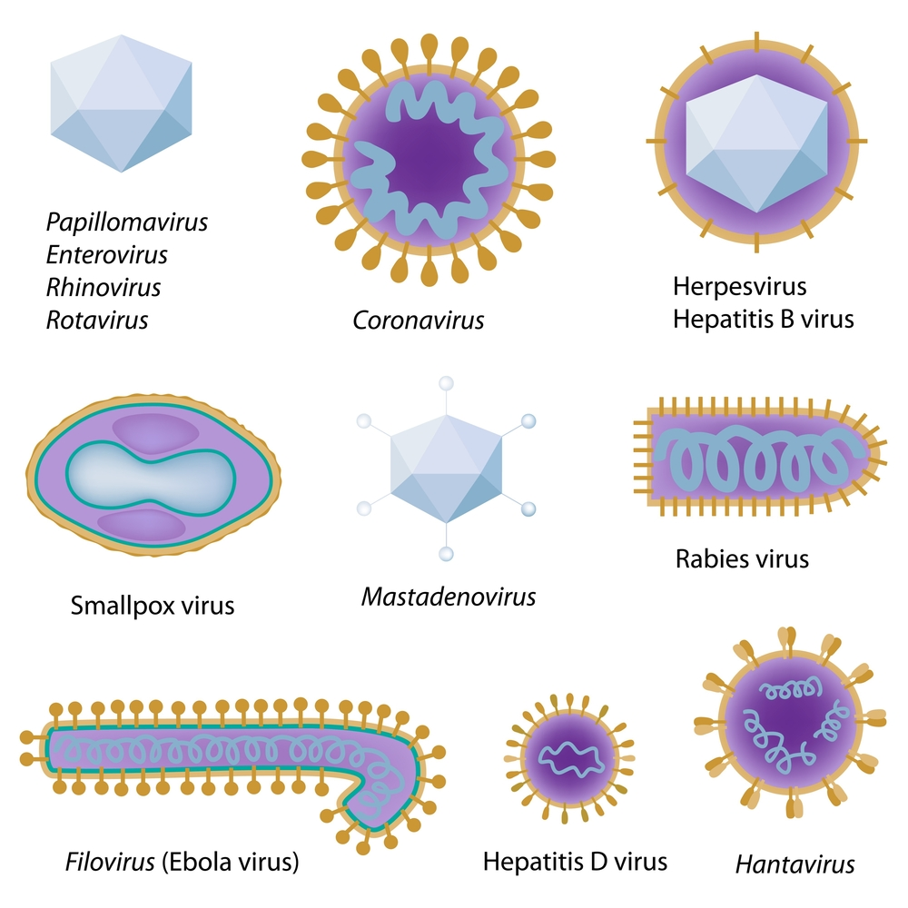 Viruses come in all kinds of different shapes. Shutterstock: http://ow.ly/zW3LF