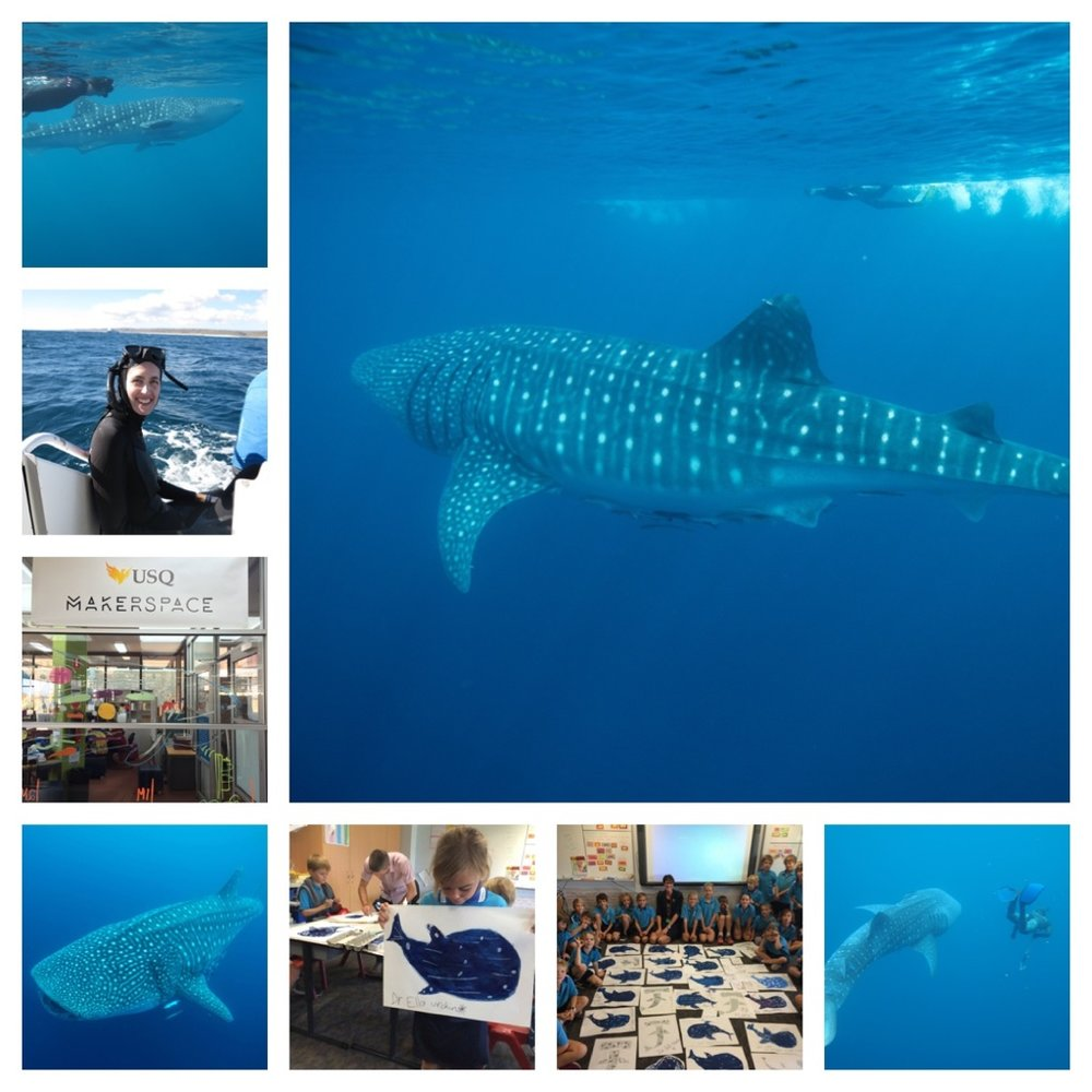 Montage by Sue Pillans -  Whale Shark Day 2016 .