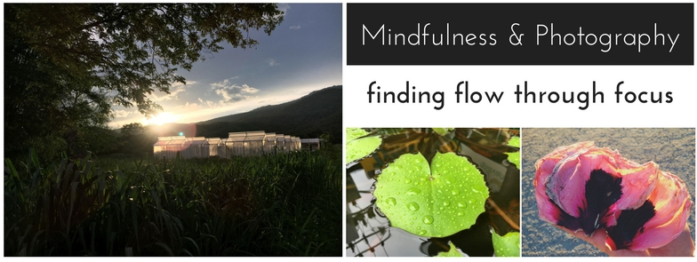 Mindfulness & Photography.jpg
