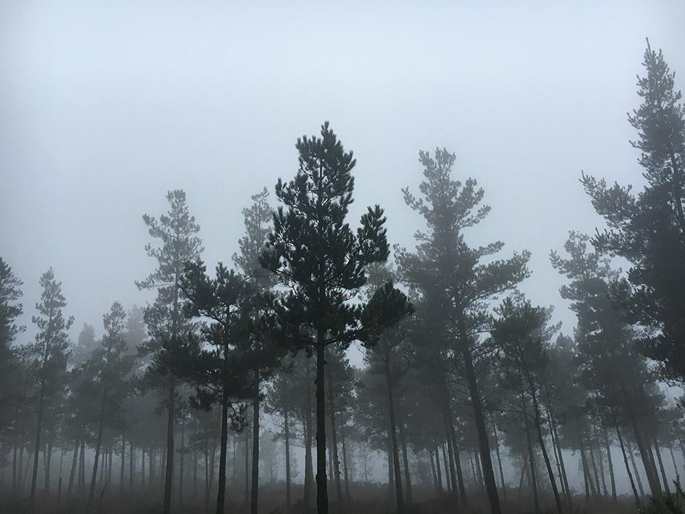 Camino5Oct.jpg