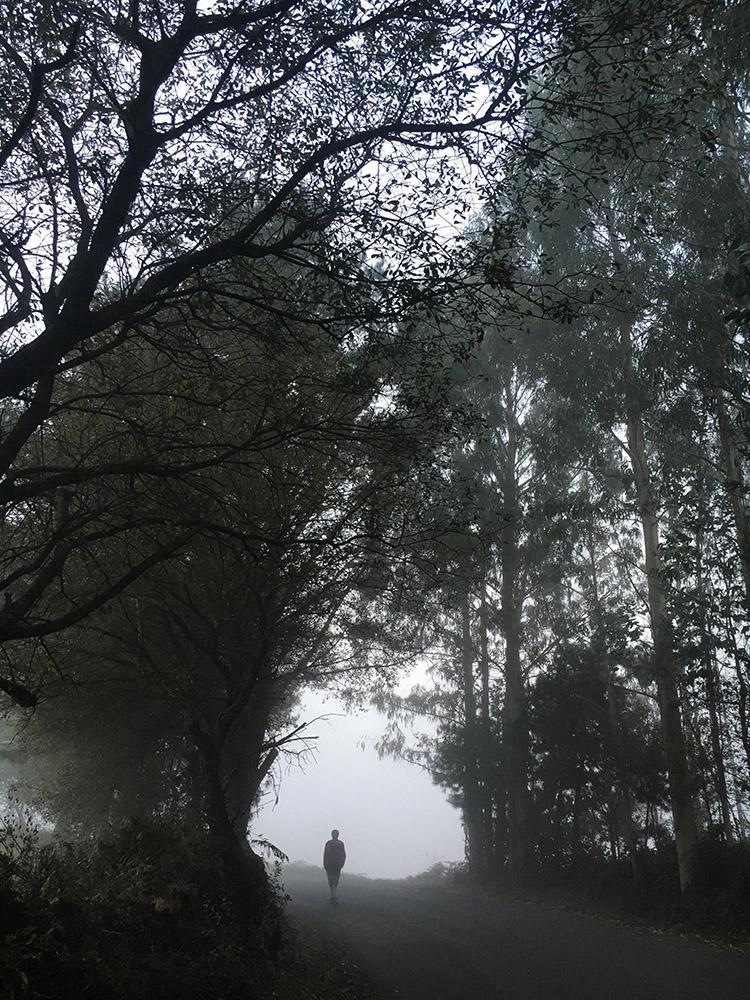 Camino11Oct.jpg