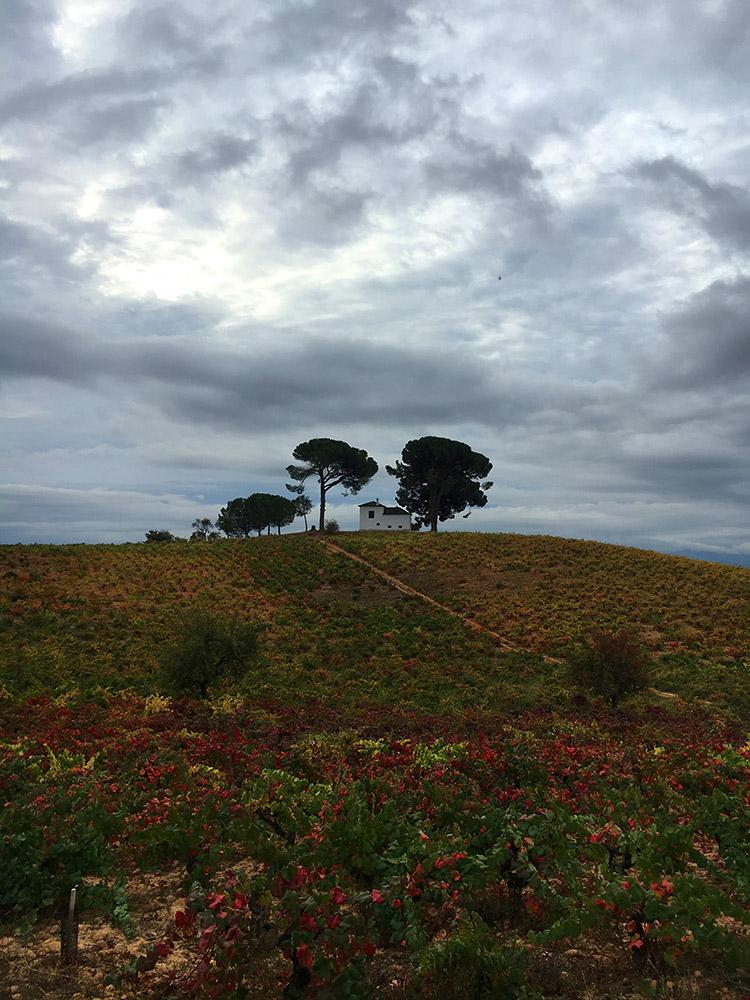 Camino-date3.jpg