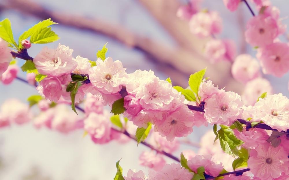 early-summer-flowers-hd-desktop-wallpaper_early-summer-flowers-hd-desktop-wallpaper.jpg