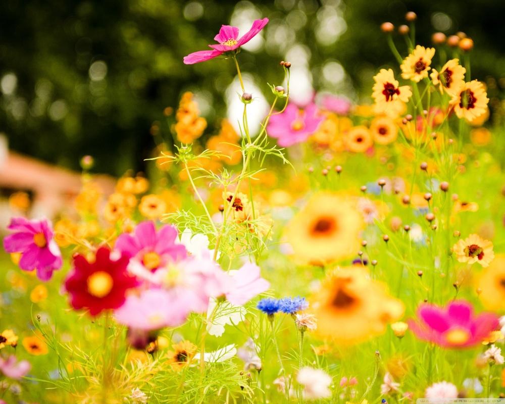 flowers_soustons_france-wallpaper-1280x1024.jpg