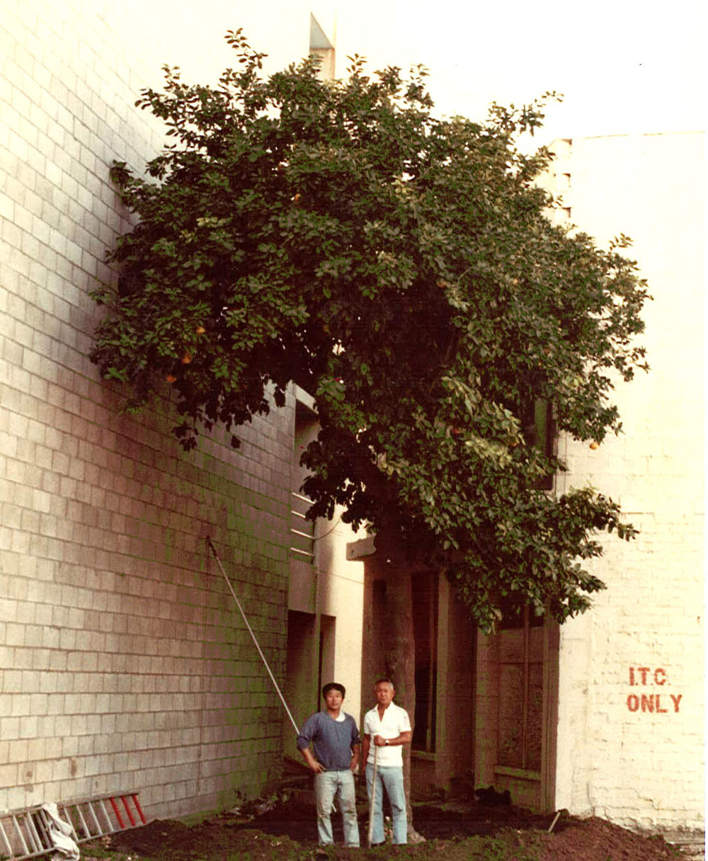 SoCal Garden Assoc_Grapefruit Tree_1.jpg