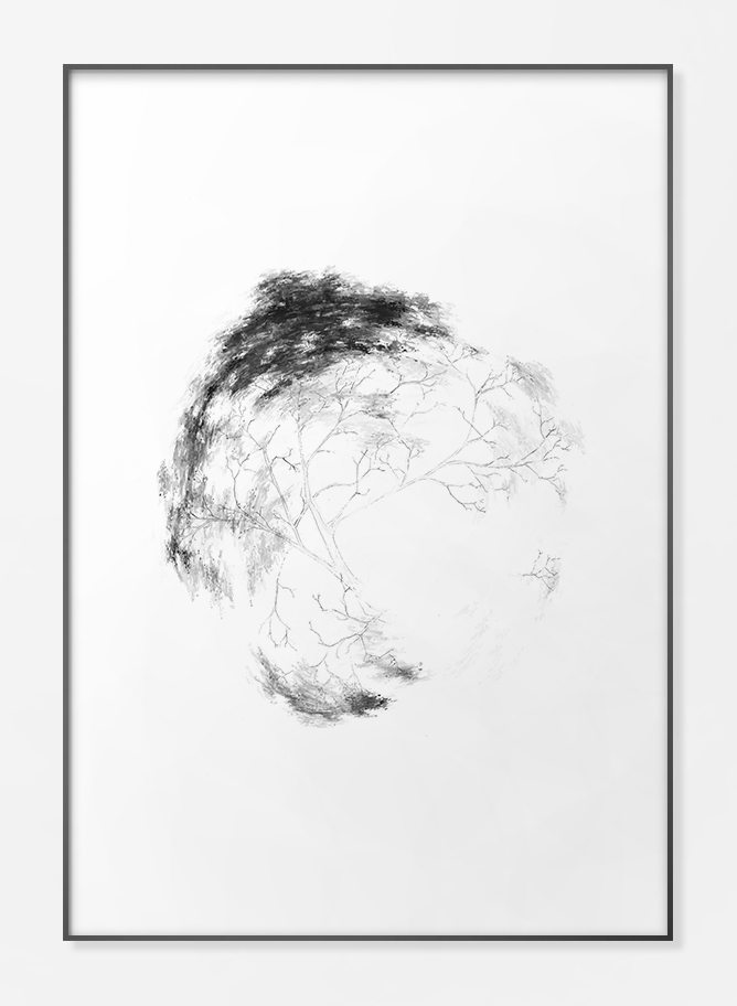 Trees - FPPLC0020