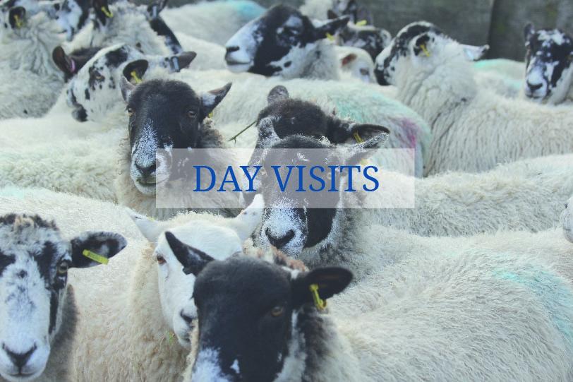DAY VISITS_Website-03.jpg