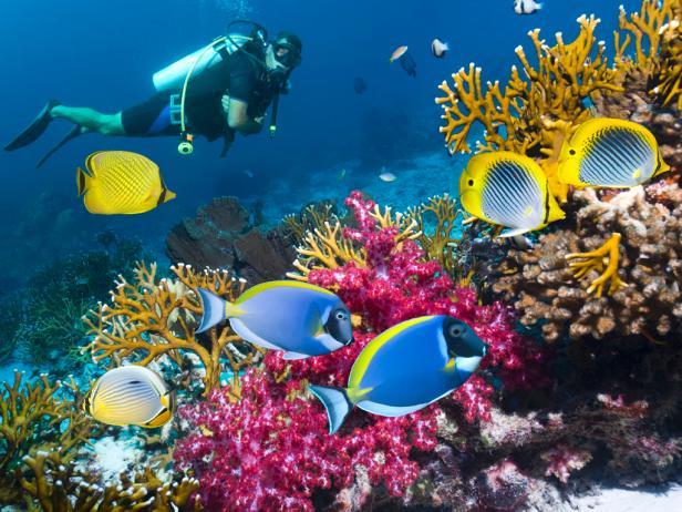 belize-diving-snorkeling-sites.rend.tccom.616.462.jpeg