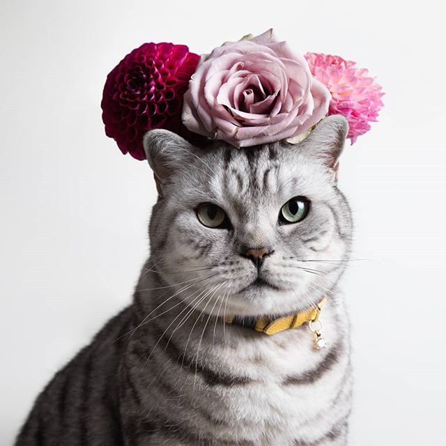 Happy first day of Spring! 🌸🌺🌼💐🌷Doesn't Percy make a gorgeous Frida Catlo!? 😻 This is one of my favourite photographs of Percy taken by the wonderfully talented @racheloates with beautiful flowers from @rebelrebele8