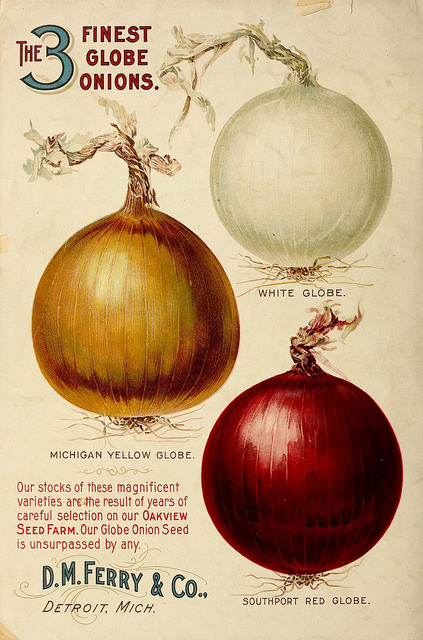 Image courtesy of The Biodiversity Heritage Library via Flickr.