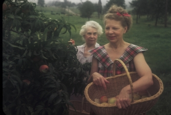 The author's grandmother and great-grandmother, picking peaches in 1943
