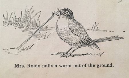 Robin, Mrs. and worm.jpg