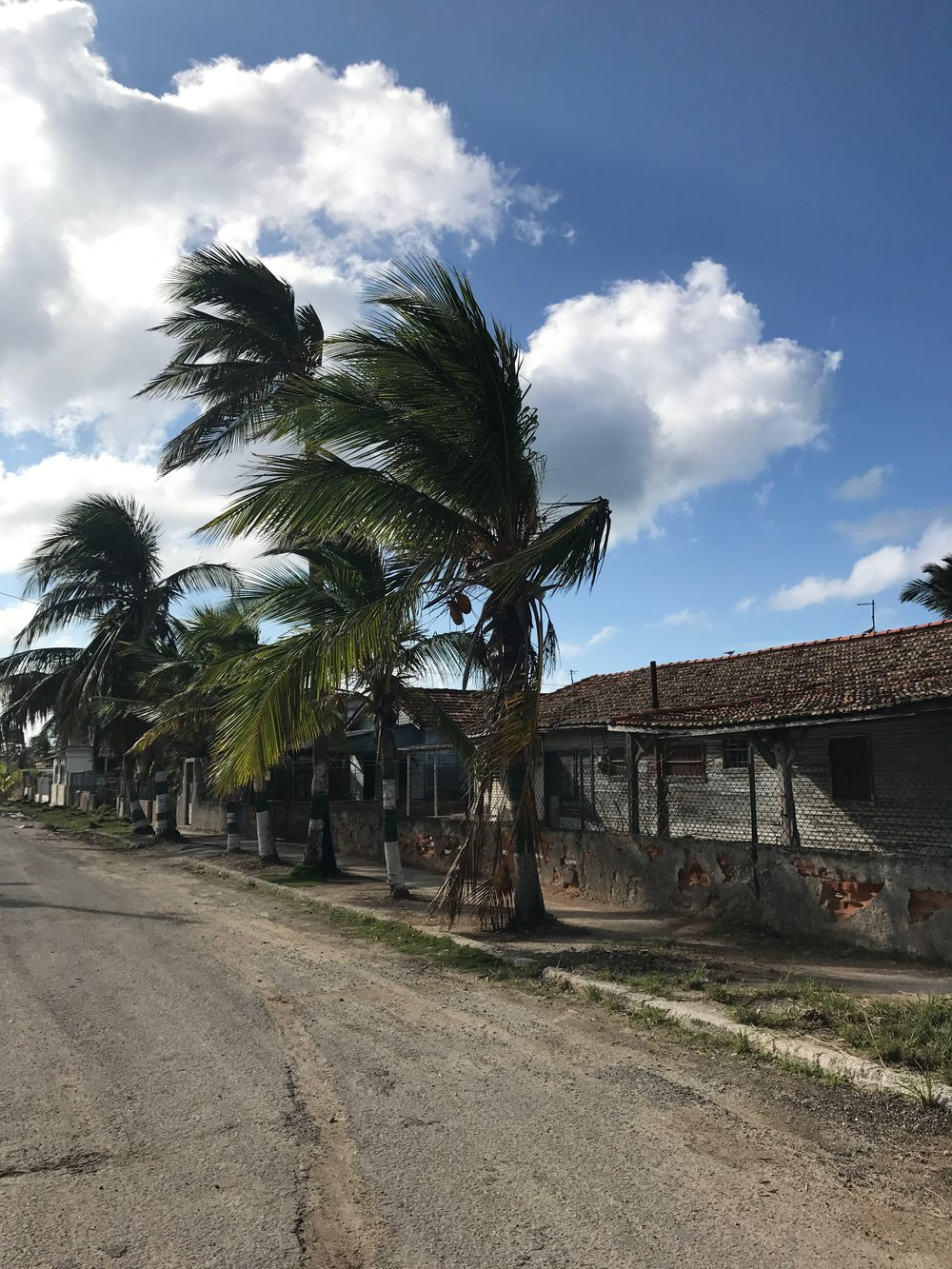 wandering the streets of guanabo, many of which were still filled with cleanup from hurricane irma
