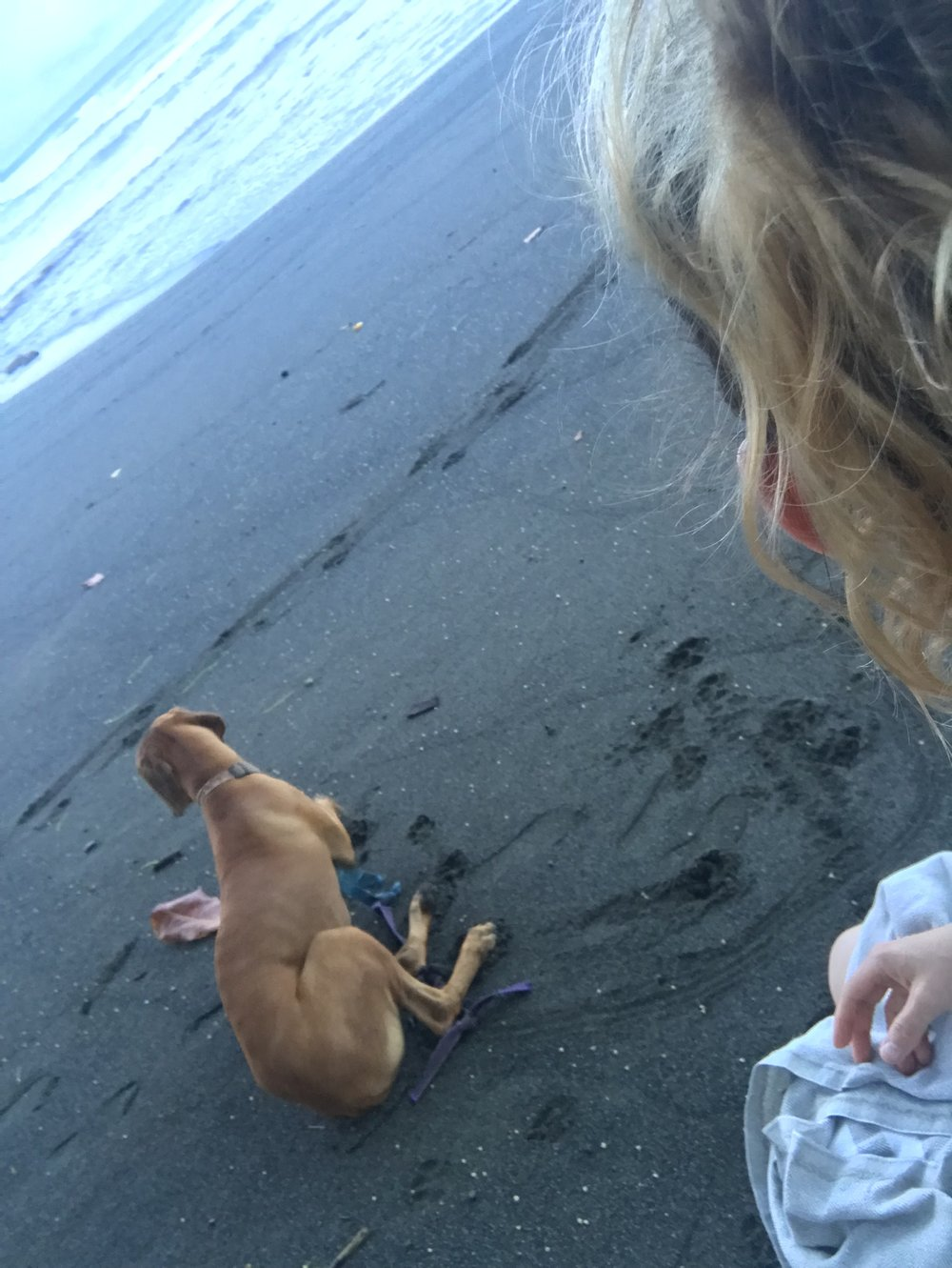 leo, rancho pup, and my retreat meditation partner.