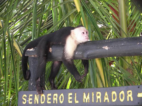 cr_monkey.jpg