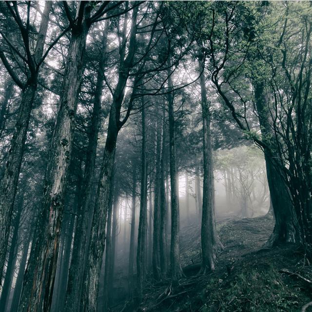 Akira Kosemura - In the Dark Woods [Schole]