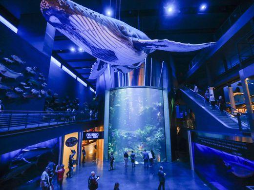 636416979332696755-Aquarium1.jpg