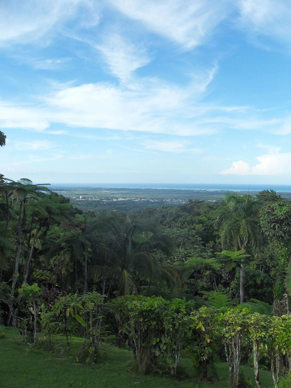 """Just one of many jungle views at Margarita's """"Villa Hermosa.""""       Nuestra Misión     Desde que compramos esta propiedad que eventualmente se convirtió en el Rainforest Inn, nosotros hemos tenido numerosas metas y aspiraciones que son darle al turista una experiencia única de Puerto Rico en un ambiente sustentable. Donde ofrecemos un retiro de la vida cotidiana y donde queremos que nuestros huéspedes se sientan como en casa mientras disfrutan de un lugar exótico. Sin embargo, nos esforzamos por ciertas cosas:  Traerle al visitante una experiencia impresionante a todo lo que el así lo desee.  Mientras nuestros huéspedes describen nuestro desayuno vegetariano como un desayuno delicioso y nutritivo. Nuestro lugar como un lugar cómodo y espacioso. El contraste de alrededor y la naturaleza alrededor del Rainforest Inn, desde la tranquilidad zen que nuestro estanque de peces koi y nuestro terreno ofrece, desde las plantas de agave, arboles de pana, carambola y guineo. Desde las vistas que ofrece nuestra caminata """"Lost machete hike"""" hasta las vistas al mar caribe que pueden ser apreciadas desde nuestro balcón para tomar el sol. Hemos trabajado para atraer a nuestros huéspedes a conectarse más con la naturaleza y atraer la naturaleza más cerca de ellos.  Nuestra meta principal es hacer su estadía en nuestra casa una experiencia natural y única.  Estamos comprometidos con la sostenibilidad y con el Bosque húmedo El Yunque  Hemos tomado el paso para hacer de El Rainforest Inn un lugar que no afecte la naturaleza que nos rodea.  Todas nuestras luces son LED y hemos abstenido la propiedad del aire acondicionado con el fin de mantener los costos de energía bajos, los techos altos, ventiladores y fuertes vientos de las montañas hacen que el aire acondicionado no sea necesario. Recogemos y re utilizamos el agua que el bosque húmedo de El Yunque nos ofrece, por medio de cisternas. Nuestro residuos de alimentos se re utiliza mediante un medio de composta donde se utilizan a largo p"""
