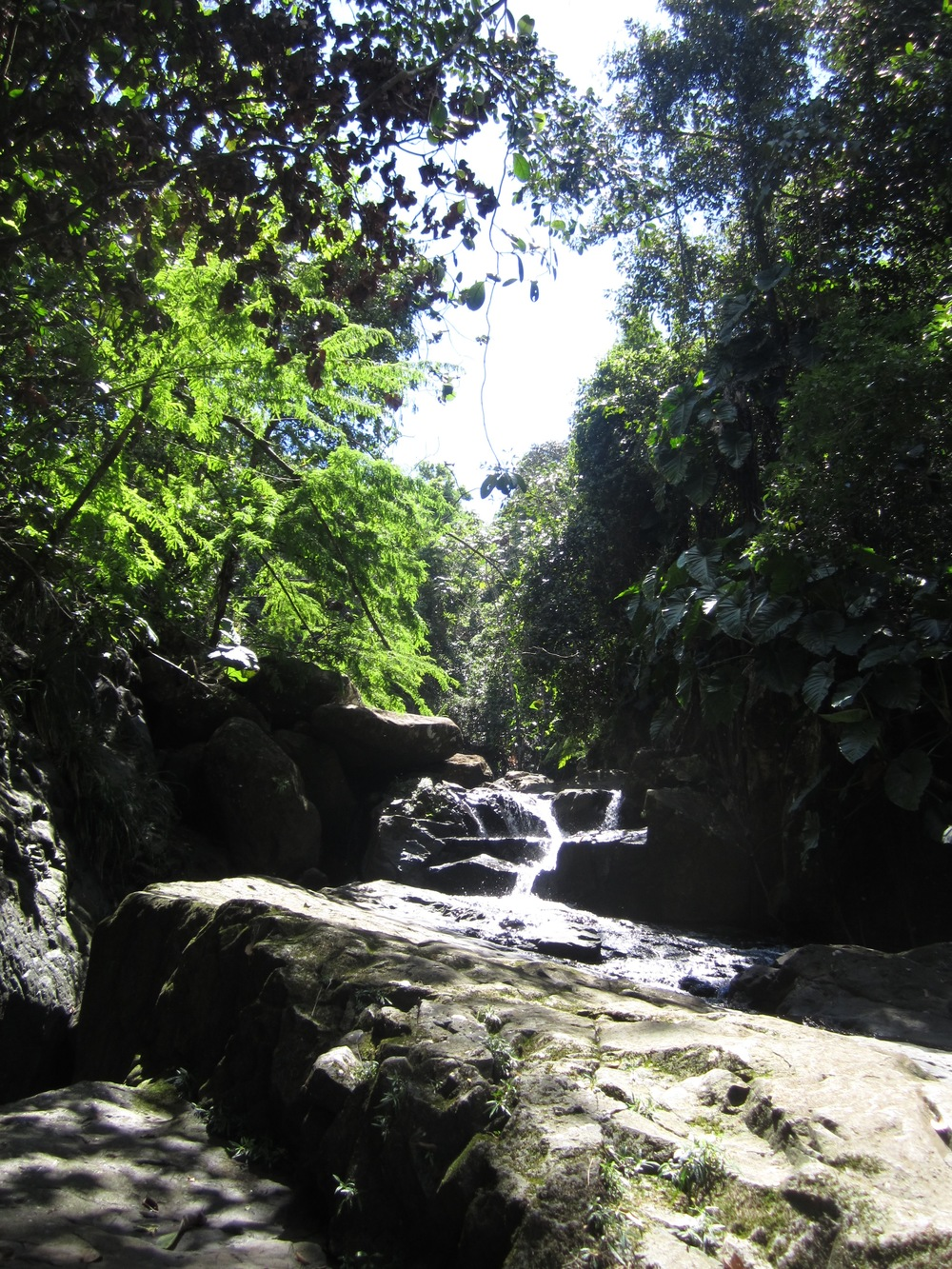 Delight in your backyard rainforest at our B&B. Test yourself on our exclusive Lost Machete Hike.