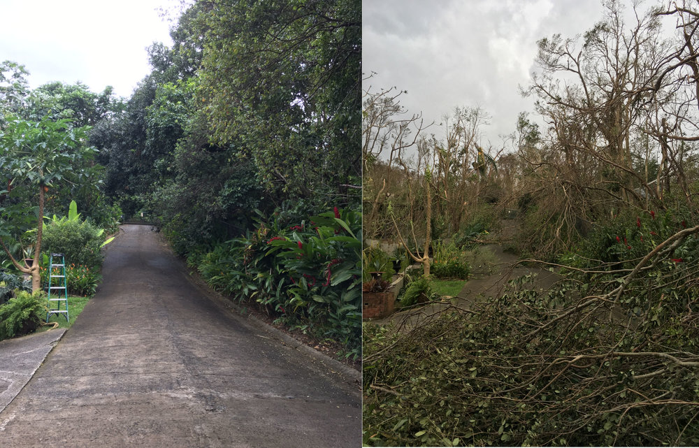 Rainforest Inn driveway before and after the storm