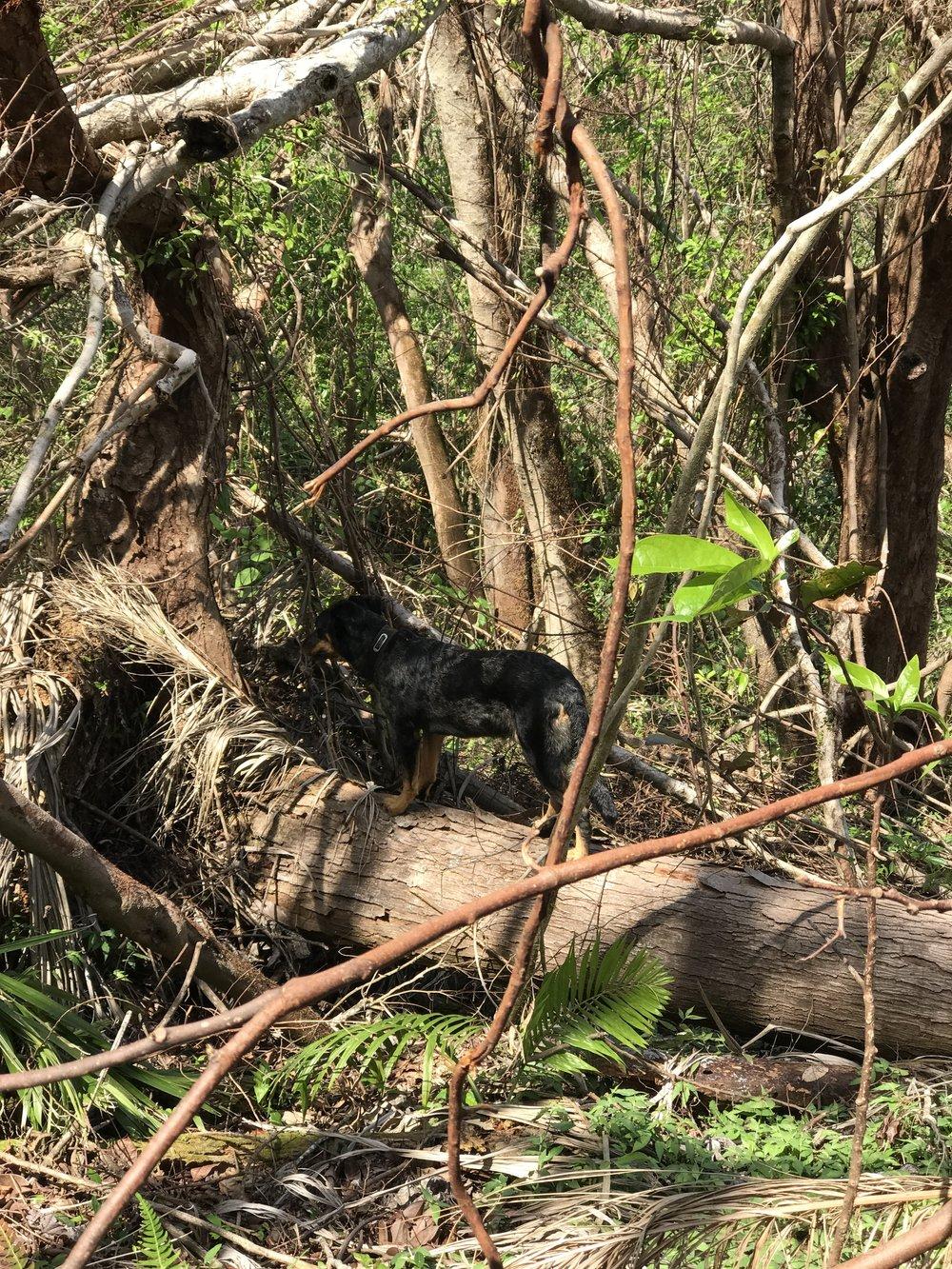 Simonne scouting trail.JPG