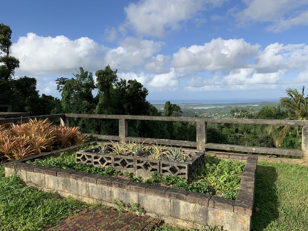 Incredible vista beyond the pineapple, strawberry, and culantro bed.