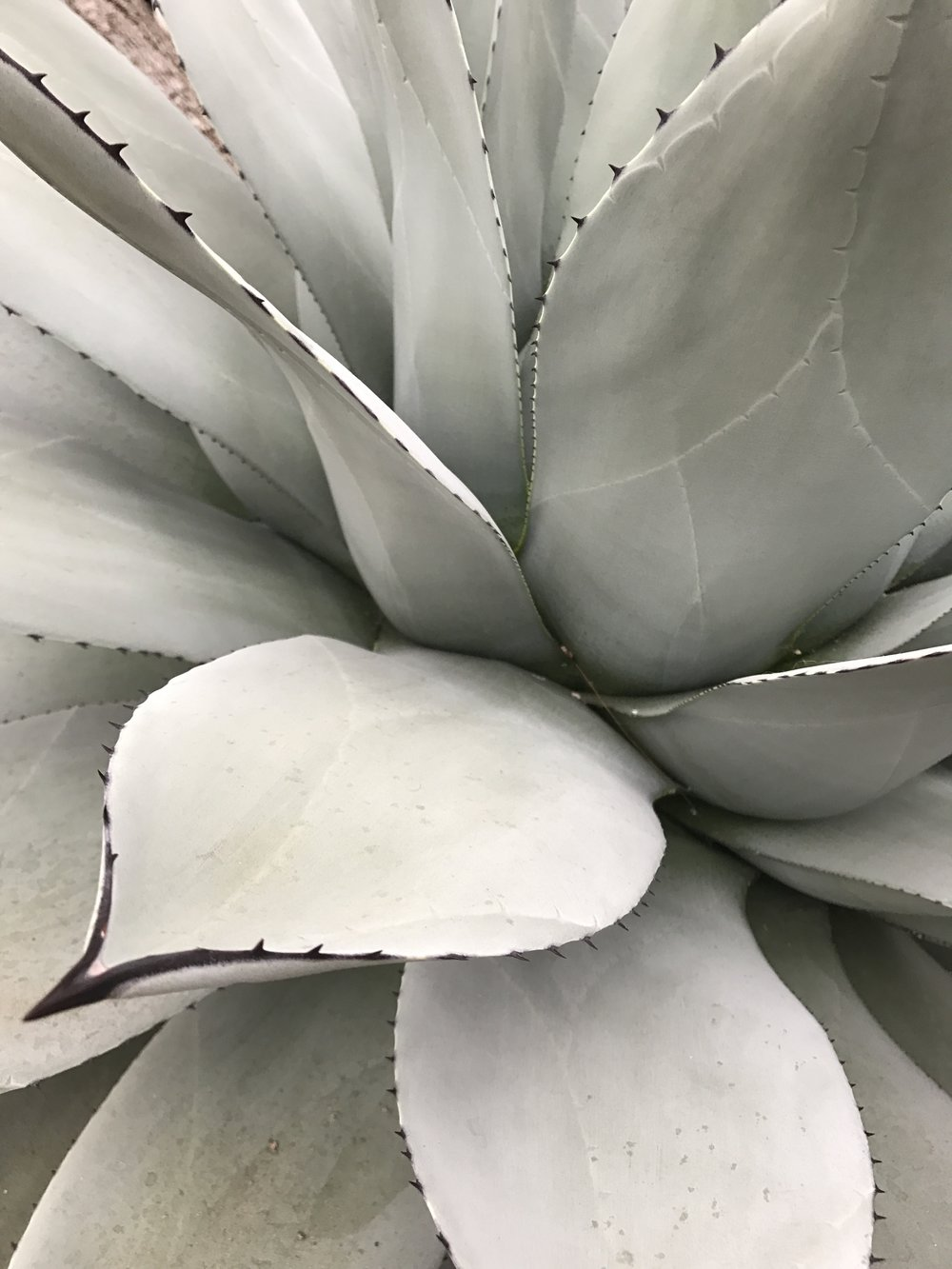 agave-conservation-seattle-wa