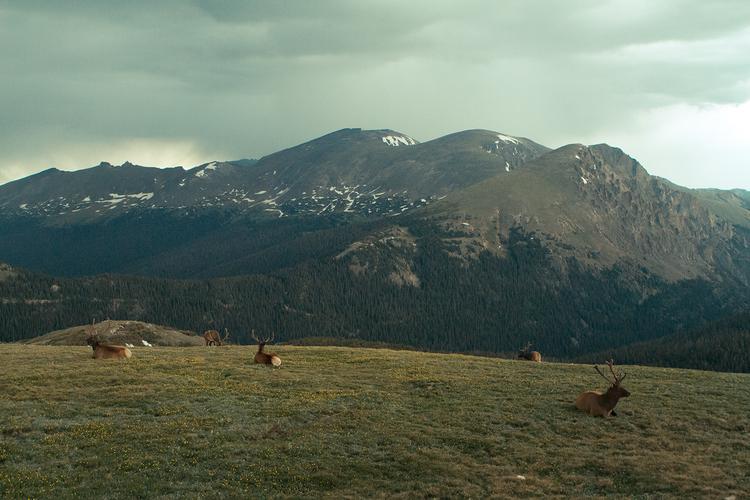 RhodesWeddingCo_Blog_Colorado_39.jpg