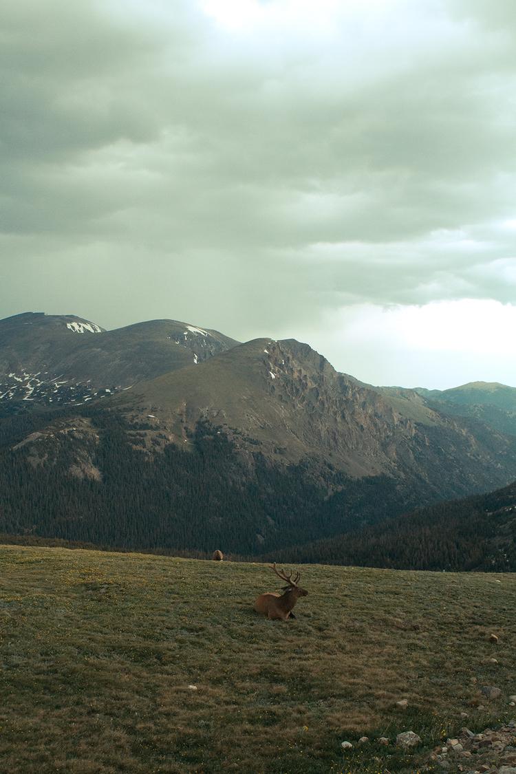 RhodesWeddingCo_Blog_Colorado_40.jpg