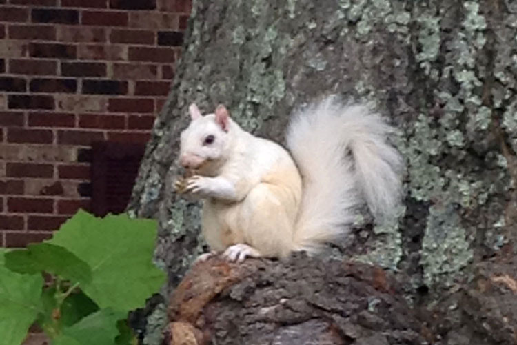 White Squirrel 2.jpg