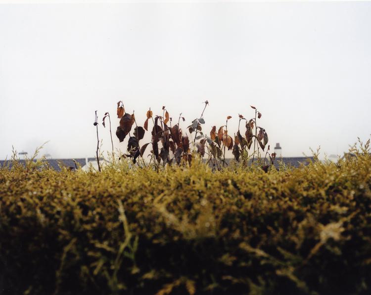 TREEN6.jpg