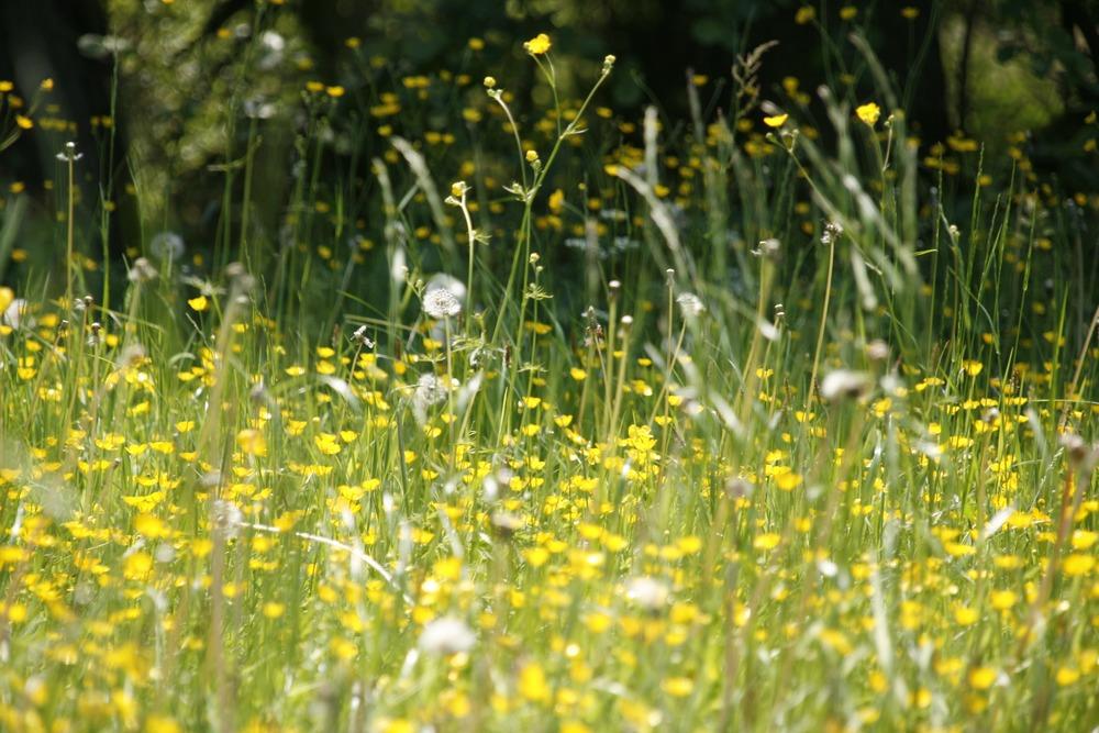 meadow-123280.jpg