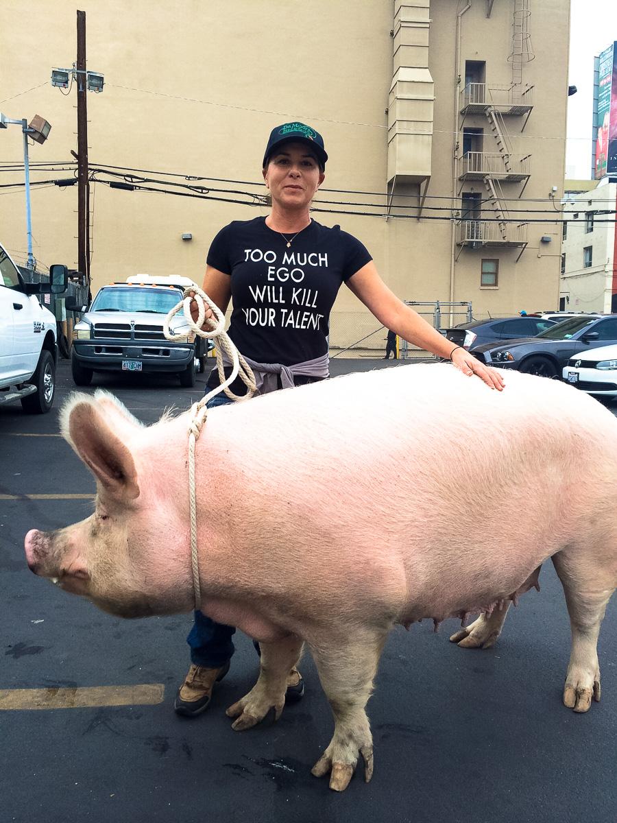 big pig-MARLEY-bhs.JPG
