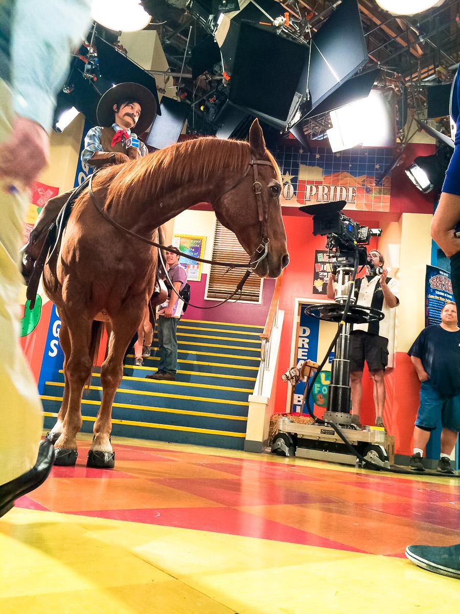 horse-bhs.JPG