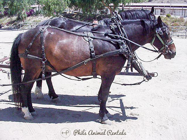 horseNewWebsite_(1_of_799).JPG