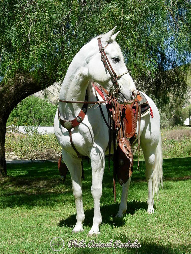 horseNewWebsite_(76_of_799).JPG