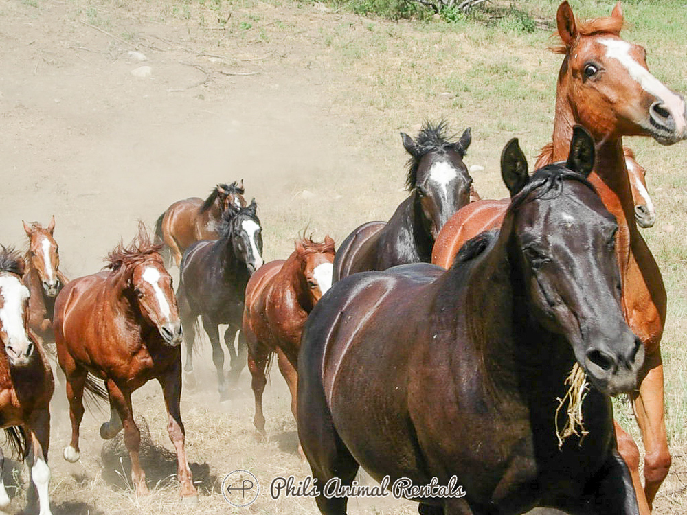 horseNewWebsite_(49_of_799).JPG