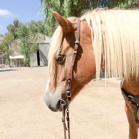 horsepony-5.JPG