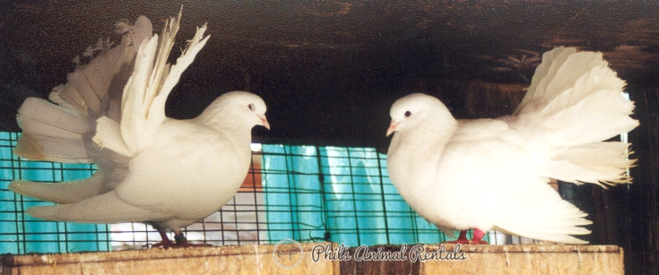 doves20040726-NewPIcs468.JPG