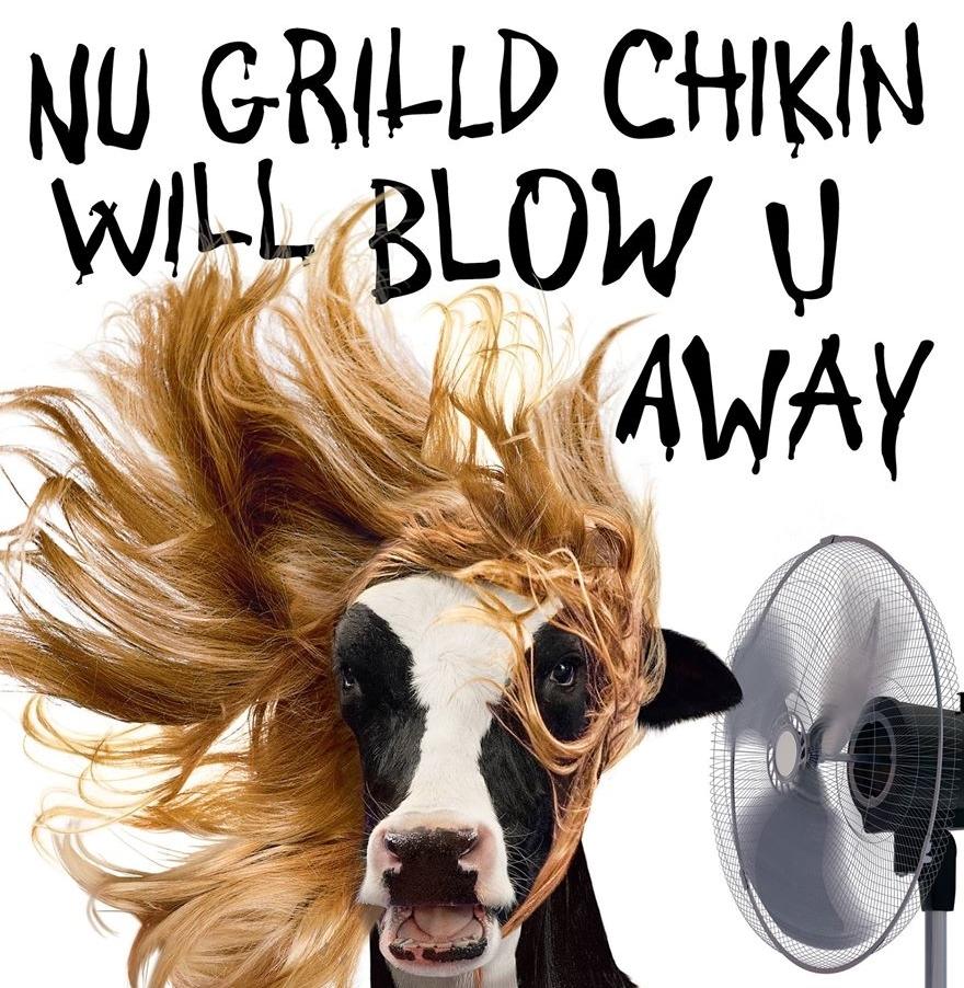 Hairdo cow.jpg
