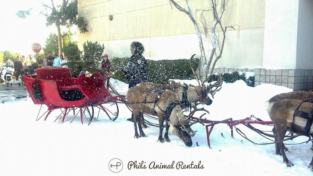 SantasSleighHitched.JPG