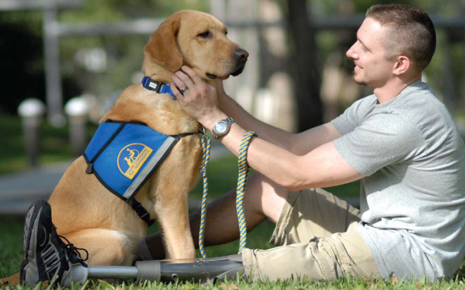 Service-Dogs.png