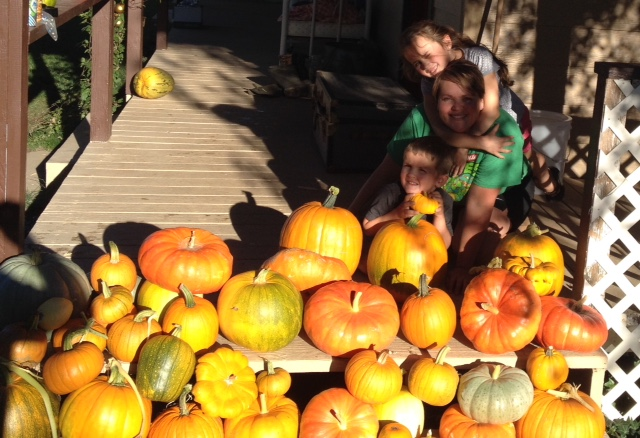 Our annual pumpkin pick down the driveway proved quite successful this year. The bees did an amazing job cross pollinating and providing a crowd pleasing variety.