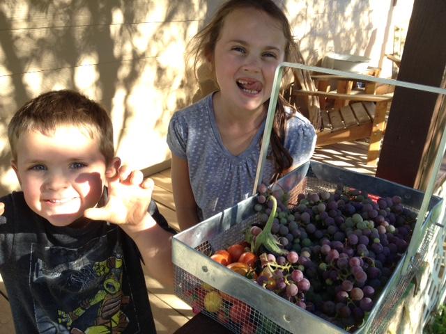 Eleanor and Emmett celebrate successful grape picking.