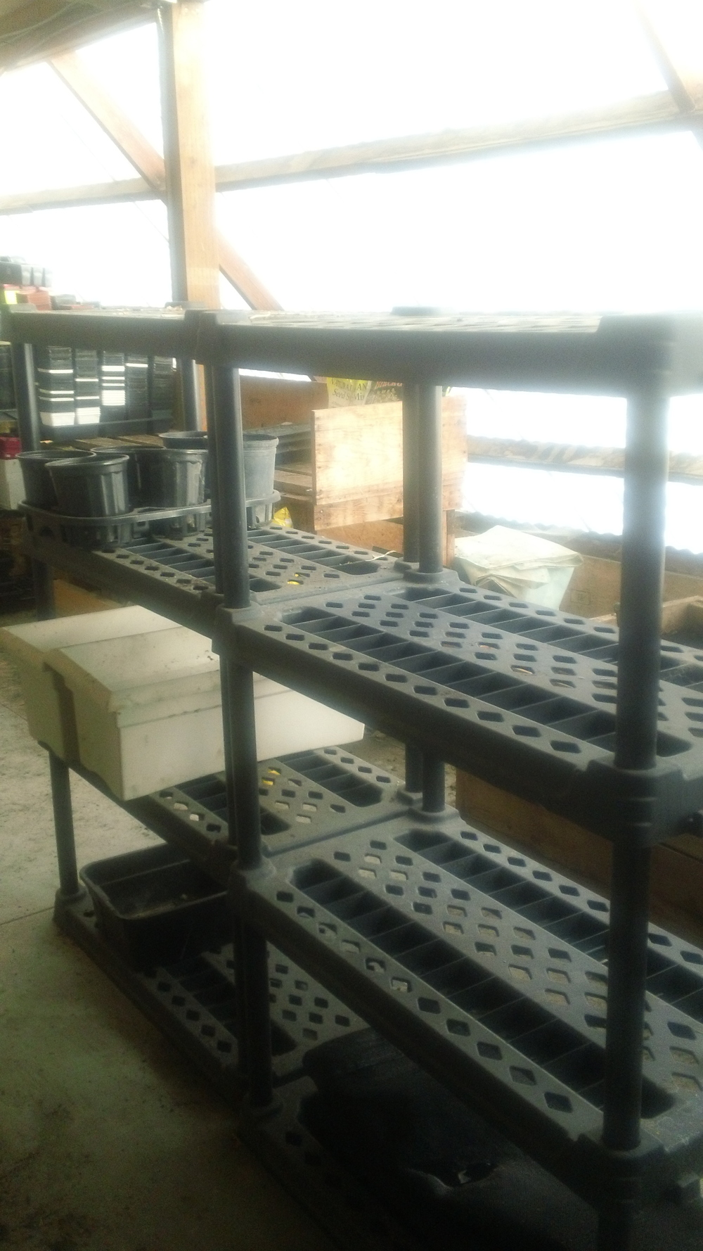 Center aisle shelving ready for seedling trays later this season
