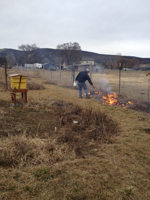 Eric burning wildflower remnants in the garden.
